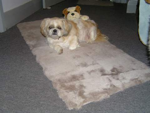 Sheepskin Short Wool Pet Rug (X- Large)