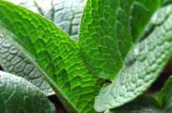 Comfrey Leaf 1kg