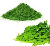 Moringa Powder 1kg - Organic