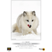 PermaJet A3+ Portrait White 285gsm - 25 Sheets