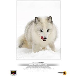PermaJet 44in Portrait White 285gsm - 12m Roll