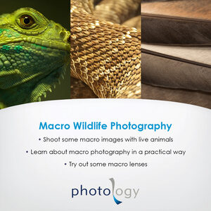 Wildlife Macro Workshop – 27/01/2018 - Sydney