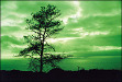 Cokin Z004 Green Z Pro-Series Coloured Filter #Z004