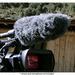 Rode WS-7 Deluxe Windshield for Shotgun Microphones