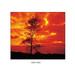 Cokin Z Pro Series Orange Coloured Filter #Z002