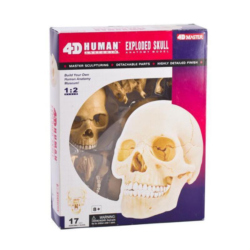 Human Skull Anatomy Model Puzzle - Educational Science 4D Brain ...