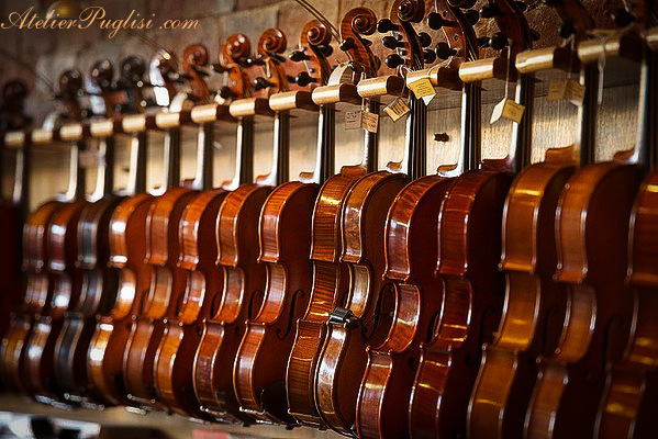 showroom violins