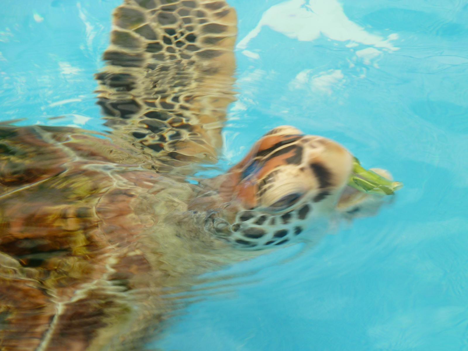 Rennie The Green Turtle